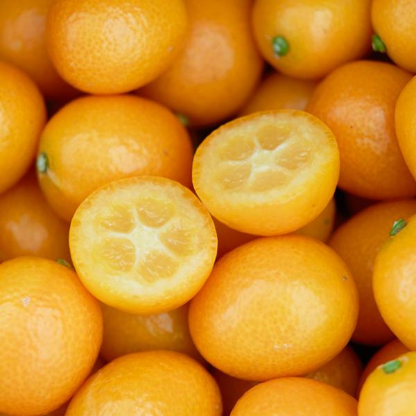 徳島県 種なし金柑「ぷちまる」