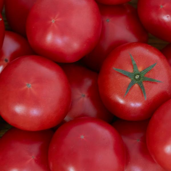 高知県産 おかざき農園LISAトマト