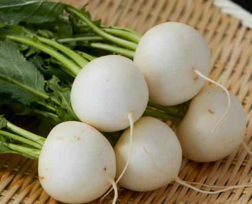 茨城県産 つくば野菜 カブ