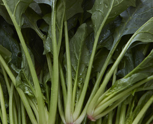 茨城県産 つくば野菜 ほうれん草